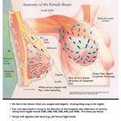 Lymphatic Massage for Good Breast Health - Holistic Breast Health