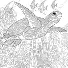Turtle coloring page. Adult coloring page. Coloring page for kids. Digital coloring page. Printable coloring page. Instant download PDF