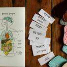 Felt Anatomy set Internal human organs 30x20cm body10   Etsy
