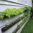 Gutter Gardens Grow Produce Without Taking Up Space