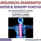 Spinal nerves – 31 pairs, emerging at each vertebral level -  ppt video online download