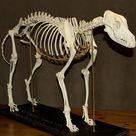 Skelett – drei hunde nacht.de