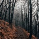 Download iPhone Xs, iPhone Xs Max, iPhone XR HD wallpapers  forest, path, fog, autumn, nature