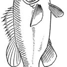 Malvorlage Fisch