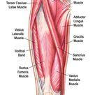 Understand Hip Anatomy Muscles for Yoga | Jason Crandell Yoga
