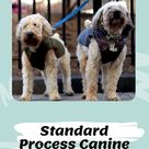 Standard Process Canine Thyroid Support