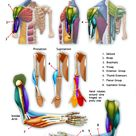 Beginning Anatomy