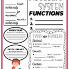 Muscular System Activity Set