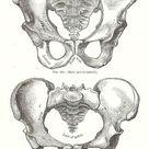 medical illustration   AnatomyBox - Part 2