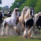 Most Beautiful Horses