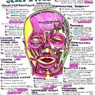 Anatomy and Physiology Study Guide   Hanson's Anatomy