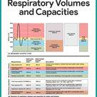 Respiratory System Anatomy and Physiology   Nurseslabs