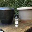 Paint Flower Pots