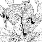 Leopard Sits On Tree coloring page | Free Printable Coloring Pages