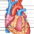 Human Reproduction System-Tnpsc