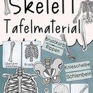 Das Skelett Tafelmaterial - Bildkarten und Textkarten zu allen Knochen