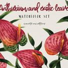 Anthurium flowers in watercolor