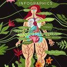 Anatomy Medical Infographics Layout Women Organs Stock Vector (Royalty Free) 782655697