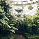 The University of Dundee Botanic Garden  — Haarkon
