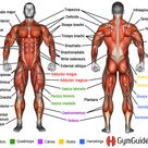 Why You Should Learn Muscle Names