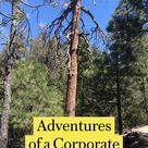 Travel Adventures of a Corporate Dropout | California | Hiking | Career