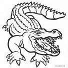 Alligator Coloring Pages | Cool2bKids