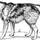 SVG > mammal animal zoology carnivore - Free SVG Image & Icon. | SVG Silh