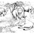 Africa lions - Africa Coloring Pages for Adults - Just Color