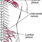 Brachial Plexus and Lumbosacral Plexus Disorders - Neurologic Disorders - Merck Manuals Professional Edition