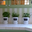 Kitchen Plants