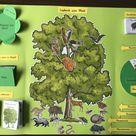 Lapbook zum Thema Wald - mit Lapbook-Vorlage! - Worksheet Crafter