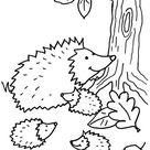 Coloriage à imprimer : Le petit hérisson en automne
