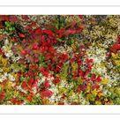 10 inch Photo. Lingonberries, Cowberries & Lichen, Lofoten
