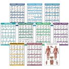 QuickFit 10 Pack   Exercise Workout Poster Set   Dumbbell, Suspension, Kettlebell, Resistance Bands, Stretching, Bodyweight, Barbell, Yoga Poses, Exercise Ball, Muscular System Chart   18