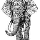 elephant on Tumblr