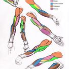 Additional Arm Diagrams 5/13