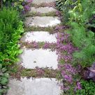 Top 10 Plants and Ground Cover for Your Paths and Walkways