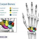 Bones of the Hand | Carpal Bones - Metacarpal bones | Geeky Medics