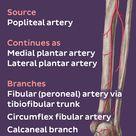 Iliac arteries