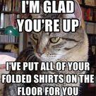 Funny Cat Humor