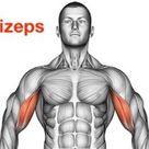 ᐅ 5 Bizeps Curls Kurzhantel Übungen (Bilder + Videos)