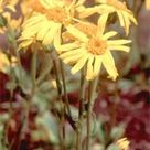 Brawls, Falls And Homeopathy | Homeopathy Plus