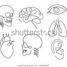 Eine Linie menschliche Organe gestalten Design Stock-Vektorgrafik (Lizenzfrei) 604630235