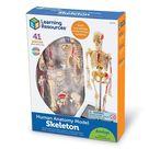 Anatomy Model, Skeleton