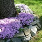 18 Genius Flower Beds Around Trees You Need To See   The ART in LIFE