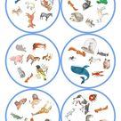 Spiele im Deutschunterricht: Dobble - Tiere (57 Karten / 8 Symbole)