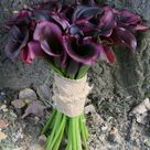 Eggplant Color