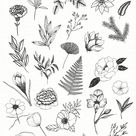 Botanical illustrations pack
