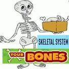 Skeletal System Functions for kids