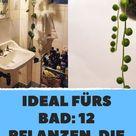 Ideal fürs Bad 12 Pflanzen, die kaum Sonnenlicht brauchen